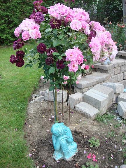Rose trees for Garden rose trees